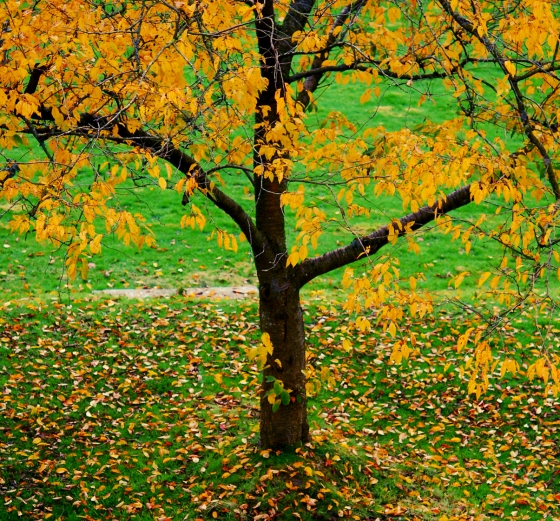 autumn_tree_green